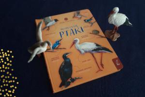 Rozpoznaję ptaki – Patrycja Zarawska